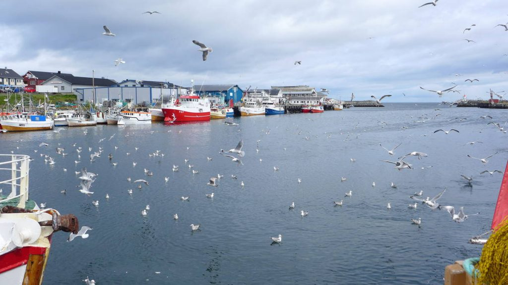 Fiskerihavnen i Berlevåg